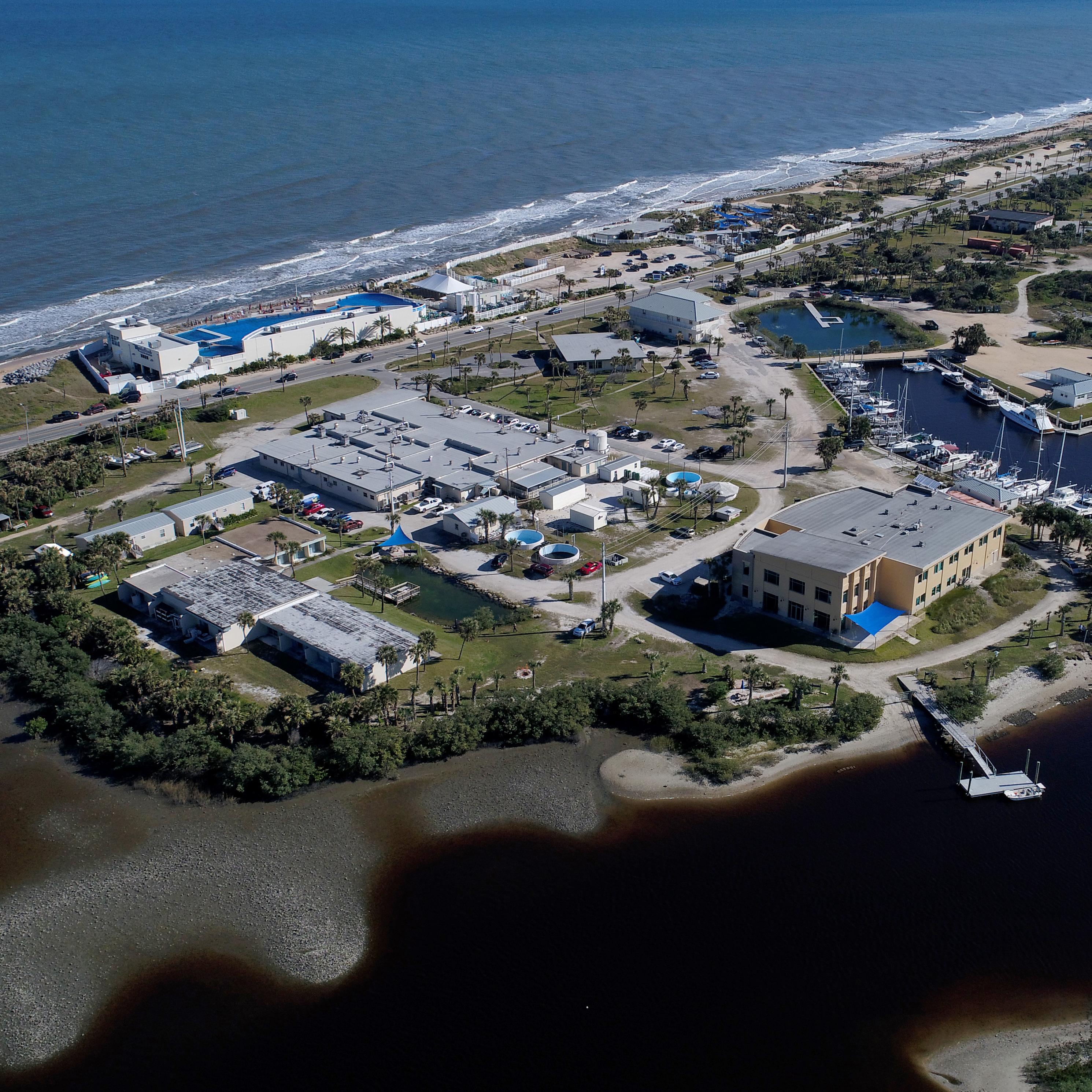 News & Events - Whitney Laboratory for Marine Bioscience