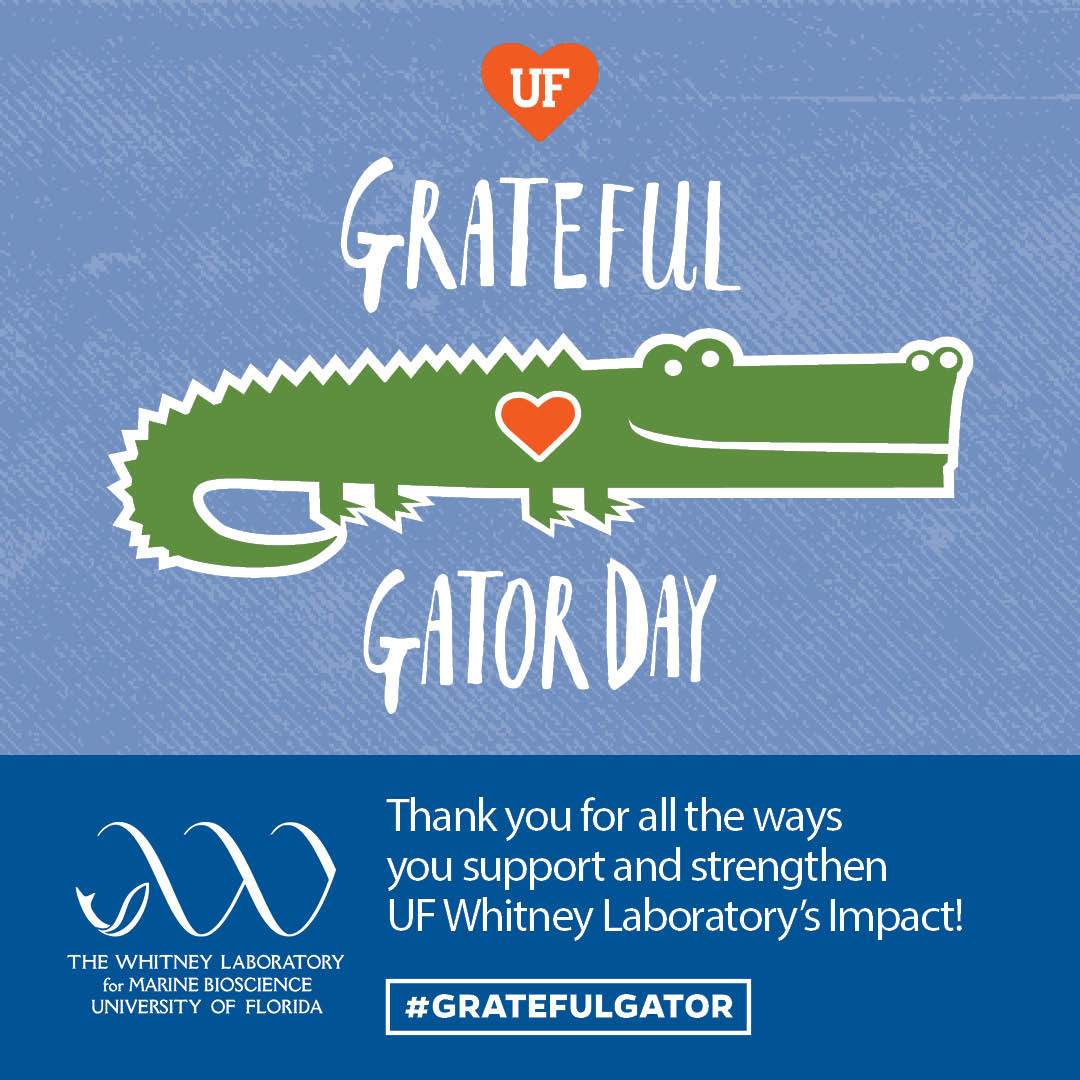 Grateful Gator Day Graphic