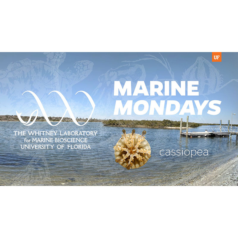 Marine Monday Intro