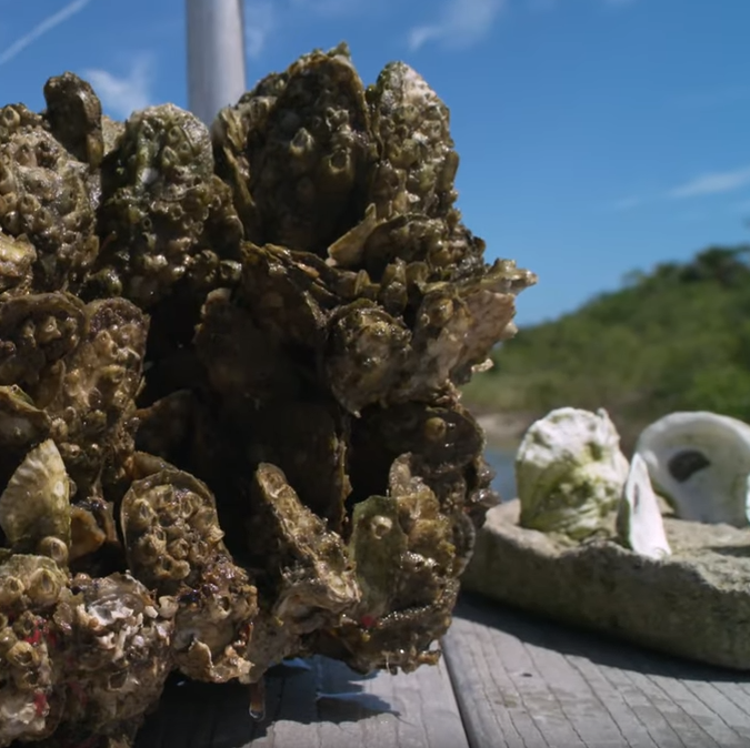 Core modules used in Whitney Laboratory's Oyster Restoration Initiative
