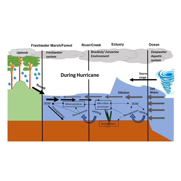 Impacts of hurricane disturbance on water quality diagram