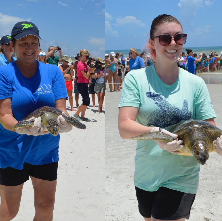 Sea Turtle Hospital volunteers holding two turtles